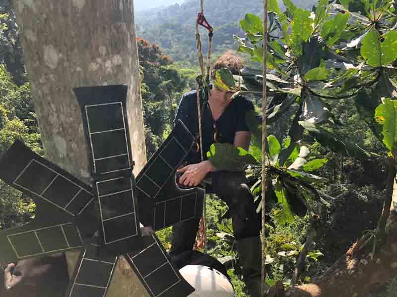 rainforest connection 2